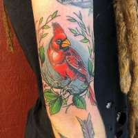Cardinal  Tattoo by Josh from  Exile Tattoo Kansas City, MO - 20180724
